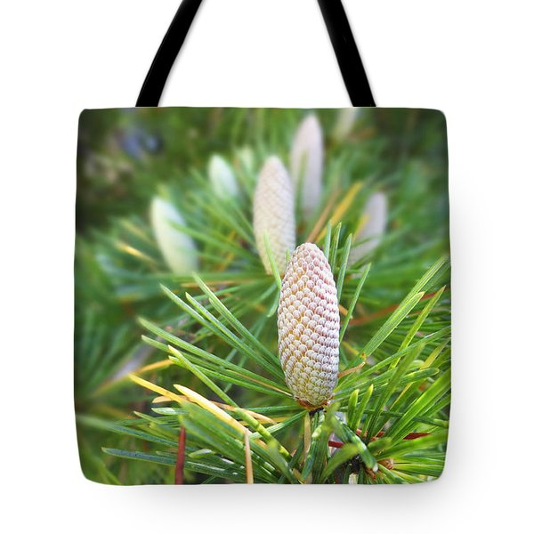 Young Pine Cones Tote Bag by Anne Mott