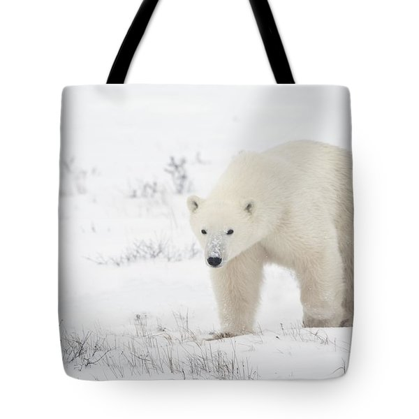 Young Polar Bear Ursus Maritimus Walks Tote Bag by Richard Wear