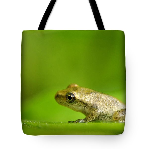 Young Spring Peeper Pseudacris Crucifer Tote Bag by Steeve Marcoux