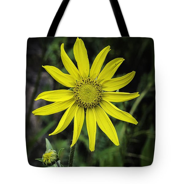 Tote Bag featuring the photograph  Arnica Montana by Bitter Buffalo Photography