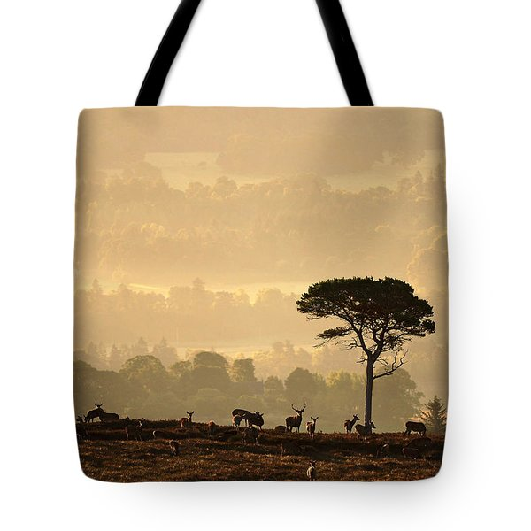 Autumn Morning, Strathglass Tote Bag