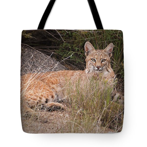 Bobcat At Rest Tote Bag