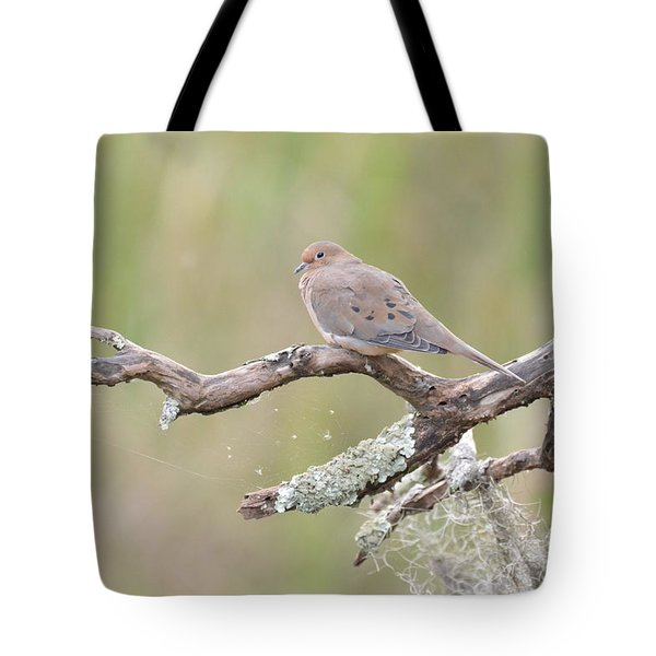 Tote Bag featuring the photograph    Early Mourning Dove by Kathy Gibbons