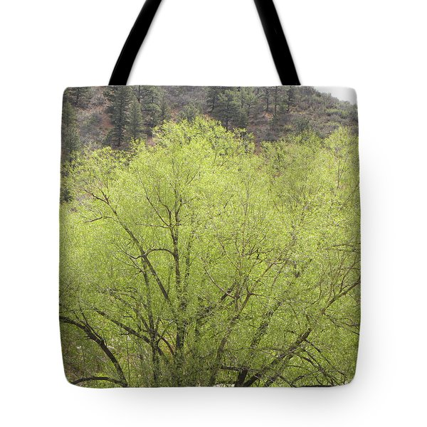 Tree Ute Pass Hwy 24 Cos Co Tote Bag