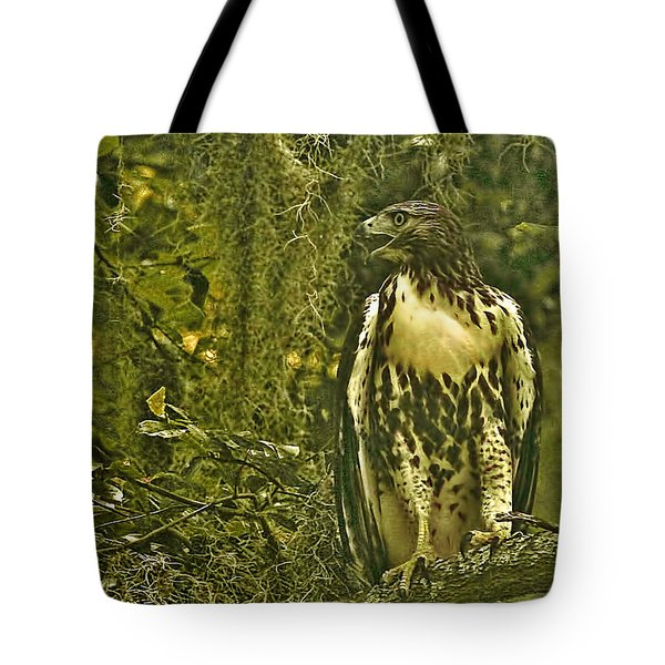 Red-tail Posing Tote Bag by Phill Doherty