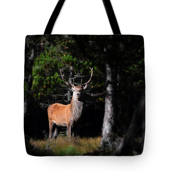 Stag In The Forest Tote Bag