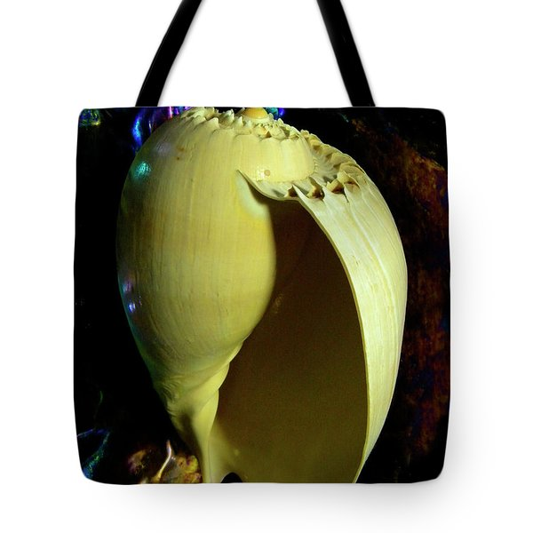 Voluta Amphora Seashell Tote Bag by Frank Wilson