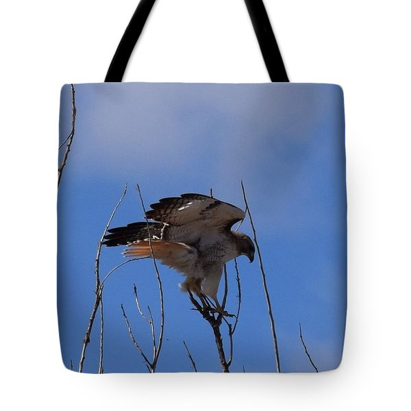 Tote Bag featuring the photograph Red Tail Hawk Female Tower Rd Denver by Margarethe Binkley