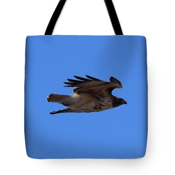 Tote Bag featuring the photograph Red Tail Hawk Male Tower Rd Denver by Margarethe Binkley