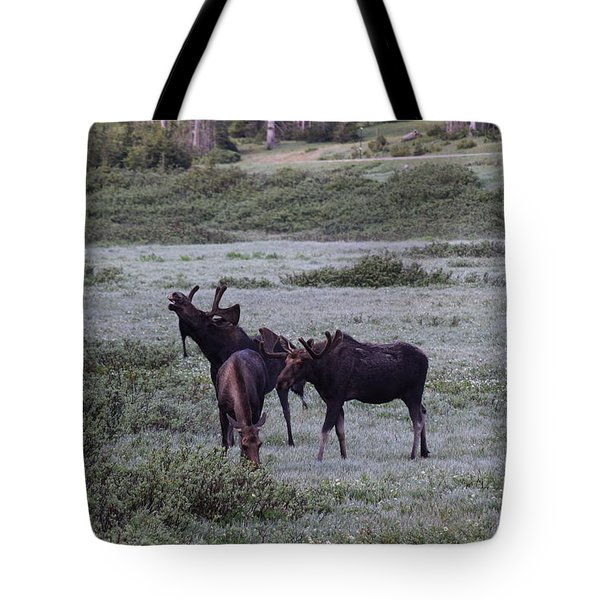 Tote Bag featuring the photograph Moose Cameron Pass Co by Margarethe Binkley