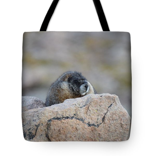 Tote Bag featuring the photograph Marmot Mnt Evans Evergreen Co by Margarethe Binkley
