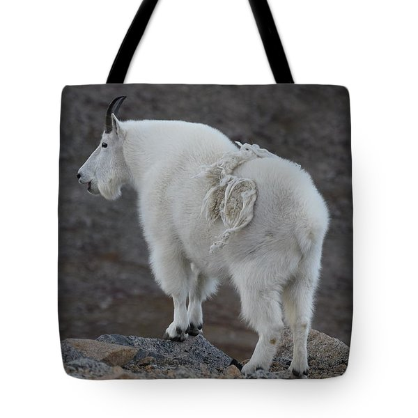 Tote Bag featuring the photograph Mountain Goat Mnt Evans Co  by Margarethe Binkley