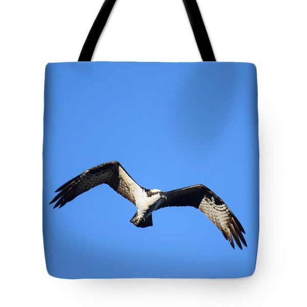 Tote Bag featuring the photograph Osprey Burgess Res Divide Co by Margarethe Binkley