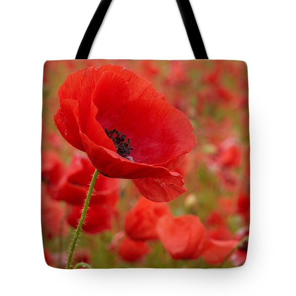 Red Poppies 3 Tote Bag by Jouko Lehto