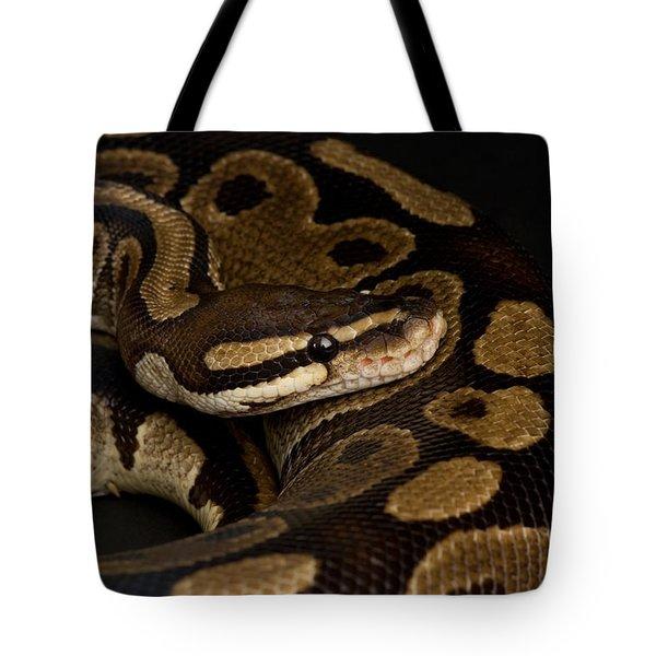 A Ball Python Python Regius Tote Bag