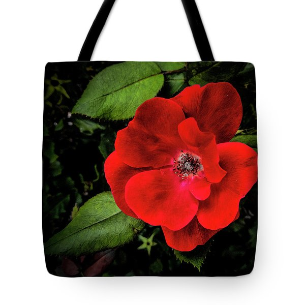 A Knockout Tote Bag