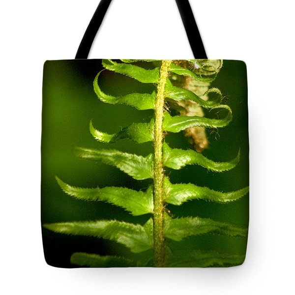 A Light In The Forest Tote Bag by Sean Griffin