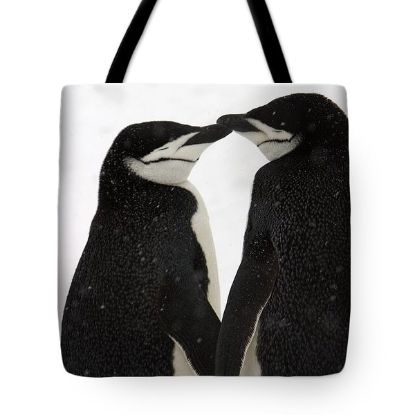 A Pair Of Chinstrap Penguins Tote Bag