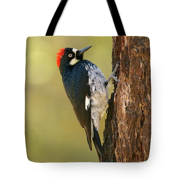 Acorn Woodpecker Tote Bag by Doug Herr