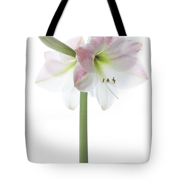 Amaryllis 2 Tote Bag