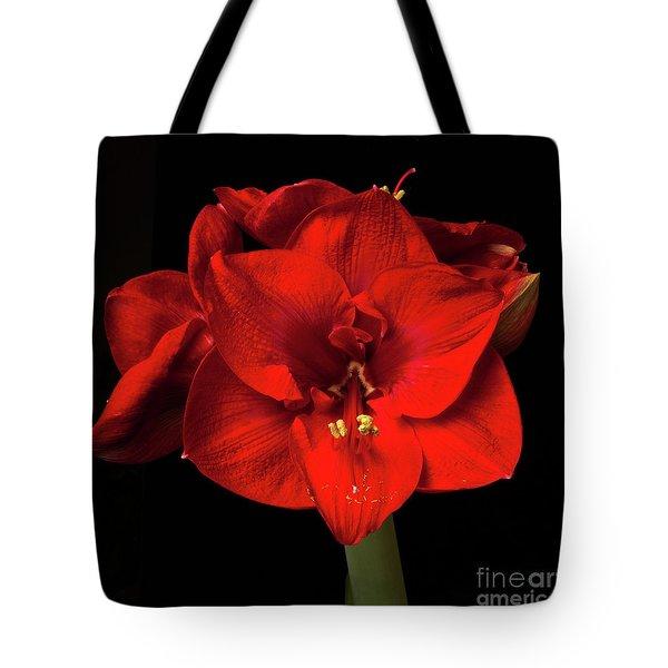 Amaryllis 'merry Christmas Tote Bag