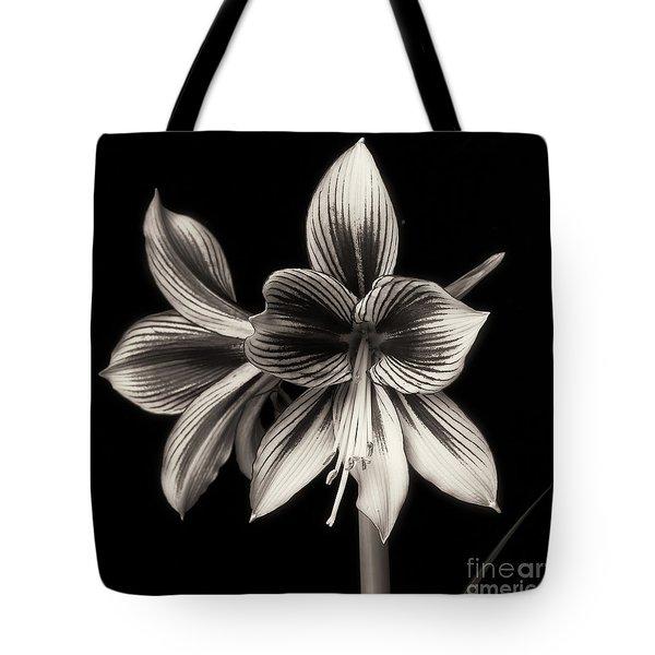 Amaryllis 'papilio Improved' Tote Bag