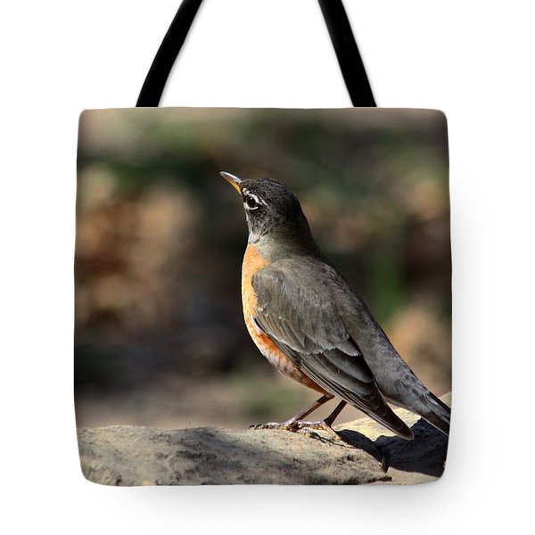 American Robin On Rock Tote Bag by Sheila Brown