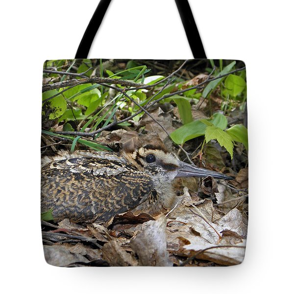 American Woodcock Chick Tote Bag