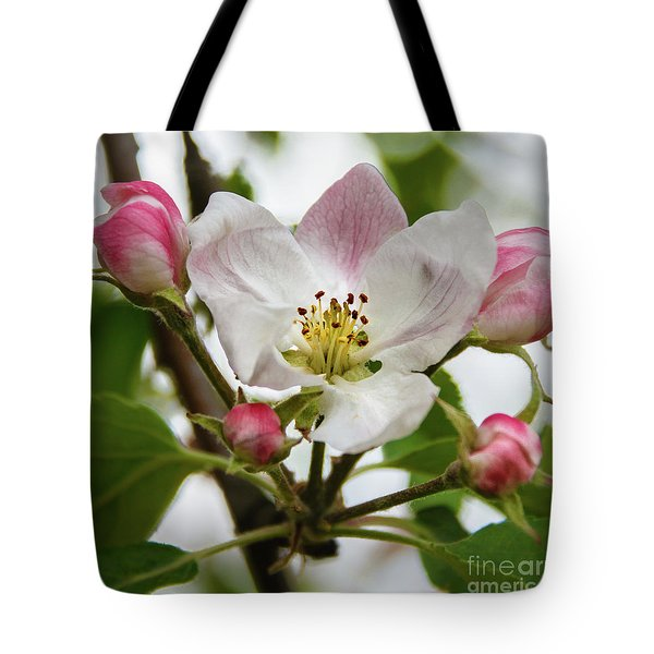 Apple Blossom Tote Bag by Robert Bales