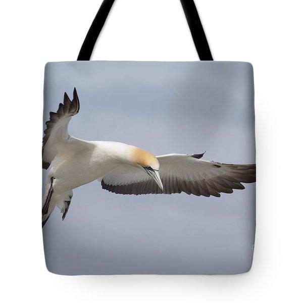 Australasian Gannet In Flight Tote Bag