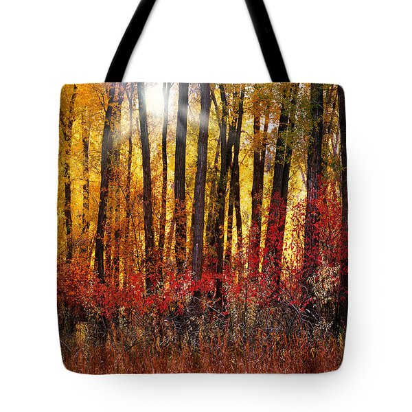 Autumn Light Tote Bag by Leland D Howard