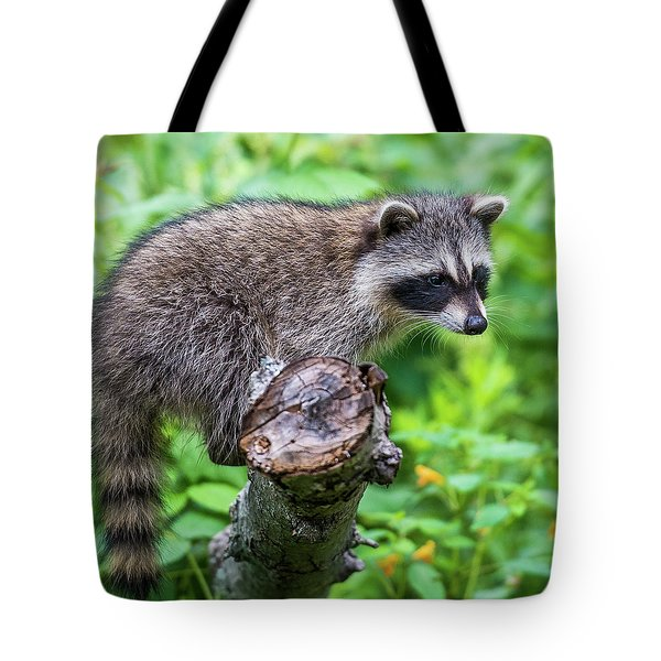 Tote Bag featuring the photograph Baby Racoon by Paul Freidlund