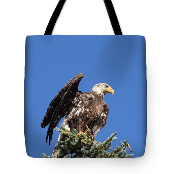 Tote Bag featuring the photograph Bald  Eagle Juvenile Ready To Fly by Margarethe Binkley