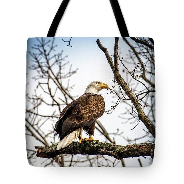 Bald Eagle Majesty Tote Bag