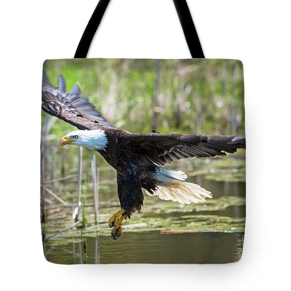 Bald Eagle-3175 Tote Bag
