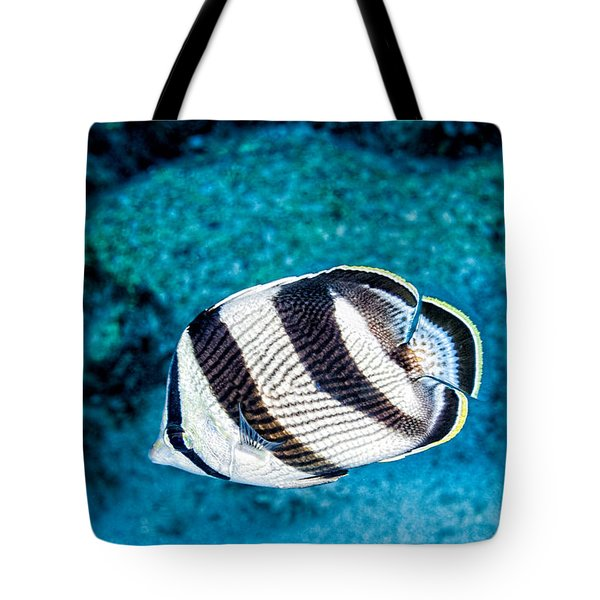 Tote Bag featuring the photograph Banded Butterflyfish by Perla Copernik