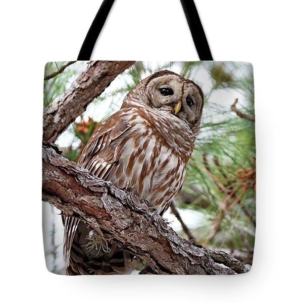 Barred Owl In Pine Tree Tote Bag