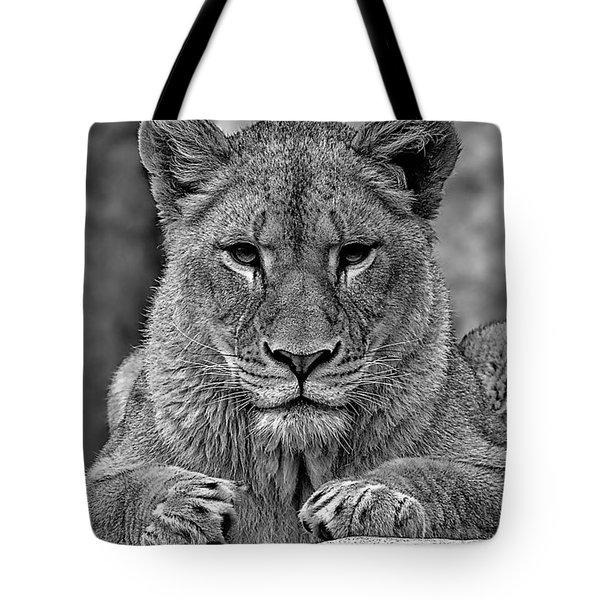 Big Cat Lion Collection Tote Bag