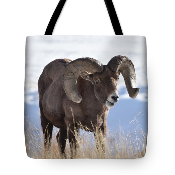 Tote Bag featuring the photograph Big Horn Sheep by Margarethe Binkley
