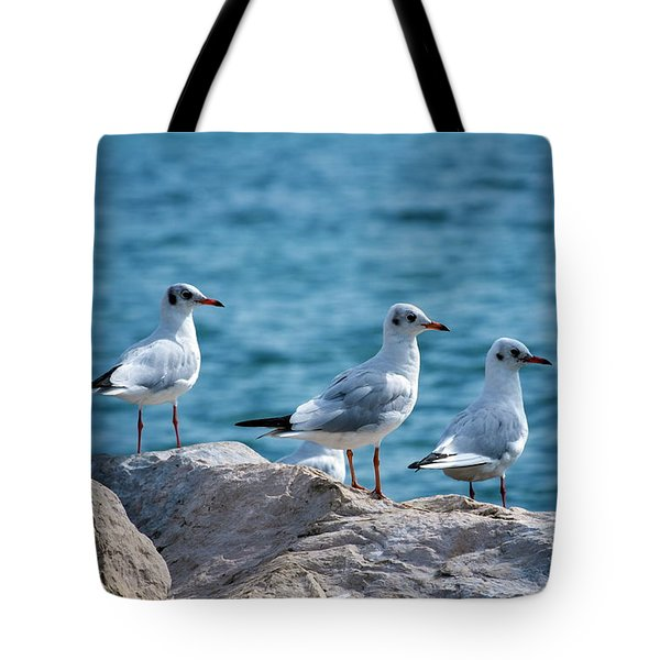 Black-headed Gulls, Chroicocephalus Ridibundus Tote Bag by Elenarts - Elena Duvernay photo