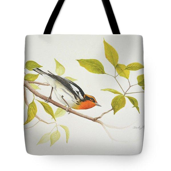 Blackburnian Warbler Tote Bag