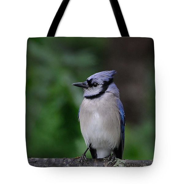 Blue Jay Tote Bag by Diane Giurco