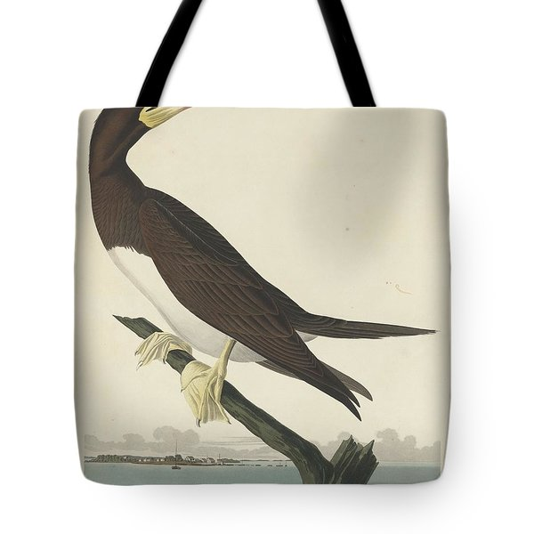 Booby Gannet Tote Bag by Rob Dreyer