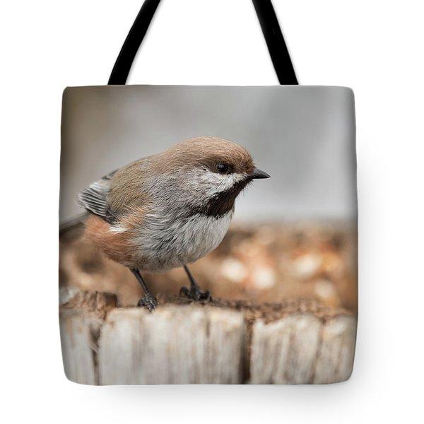 Boreal Chickadee Tote Bag