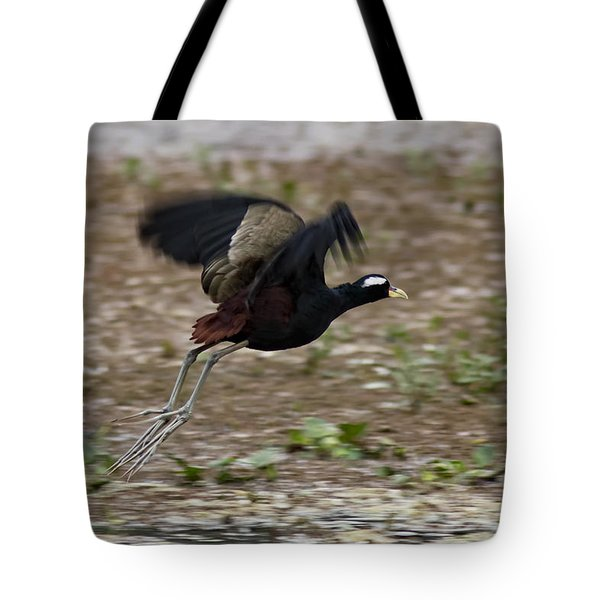 Bronze Winged Jacana  Tote Bag