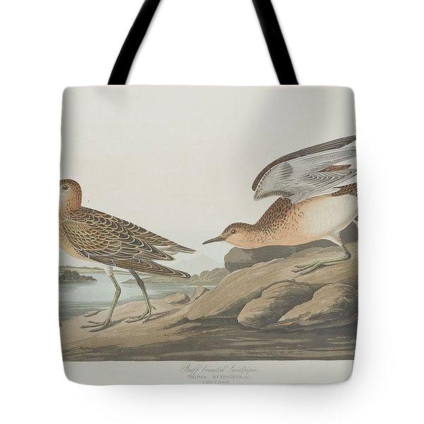 Buff-breasted Sandpiper Tote Bag by Anton Oreshkin