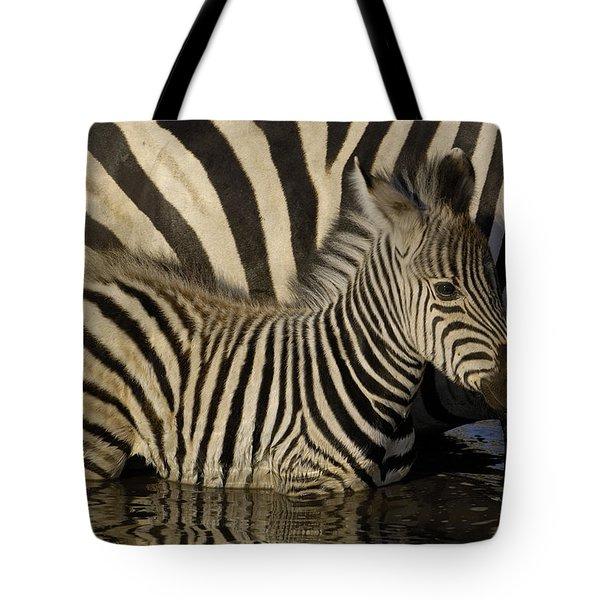 Burchells Zebra Equus Burchellii Foal Tote Bag