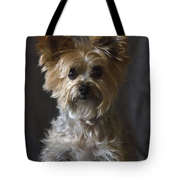 Tote Bag featuring the photograph Buster by Irina ArchAngelSkaya