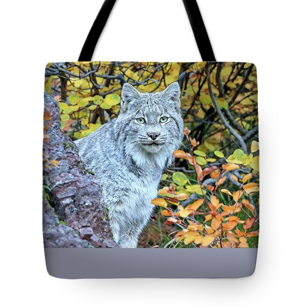 Canada Lynx Tote Bag by Jack Bell