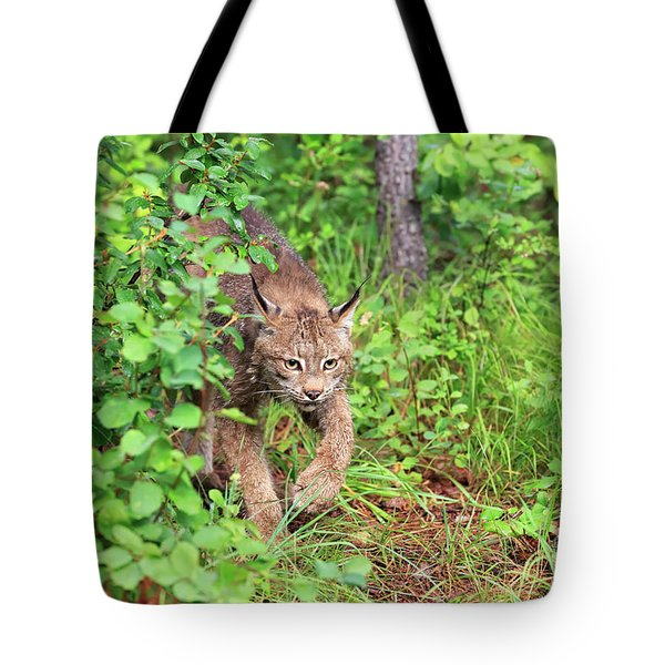 Canada Lynx Tote Bag by Louise Heusinkveld